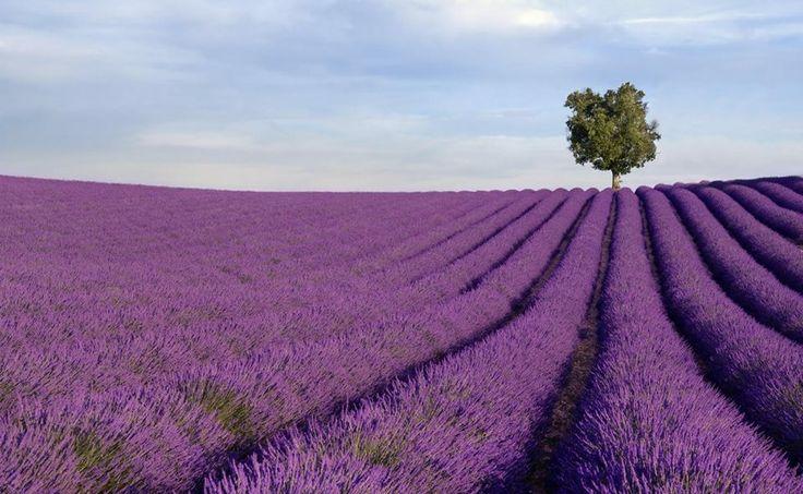 Anxious? 4 Ways Aromatherapy Can Help.
