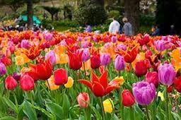 Image result for wellington city botanical gardens