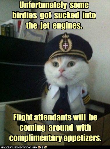 243376dfd3b037b0f5cdcdb3bf1a6736 funny dogs funny memes 96 best aviation humor and fun images on pinterest aviation,Airplane Mechanic Funny Memes