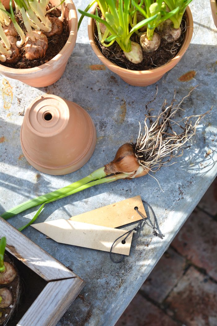 Varaslähtö kevääseen - Minttua ja mustikoita