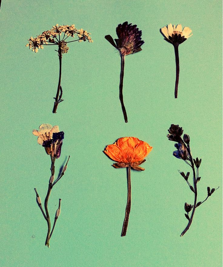 Pressed flowers.: Inspiration, Color, Press Flowers, Art, Posts, Dried Flowers, Things, Floral