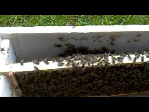 Bienen Ableger im Mai bilden - YouTube