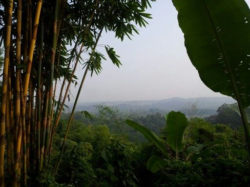 View into Burma from a treehut up on a mountain in Chiang Rai