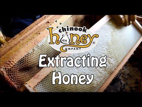 Extracting Chinook #Honey - YouTube