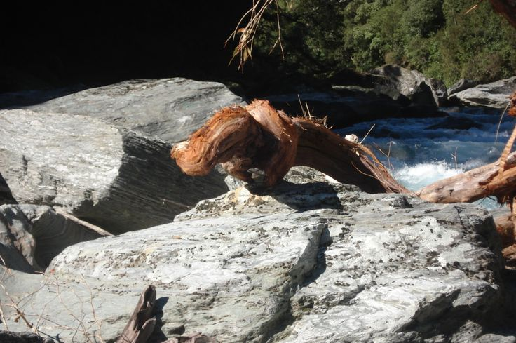 Big river lizard
