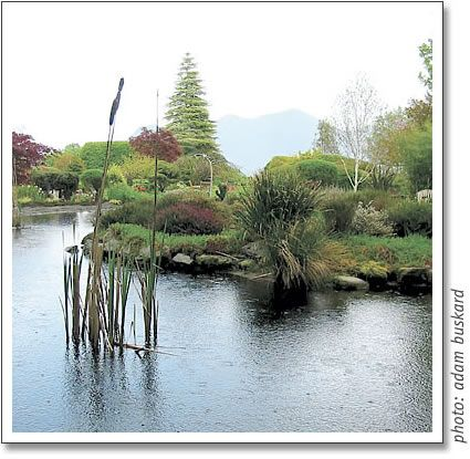Clayoquot Island Gardens open only once a year on May Long in Tofino....a must see!