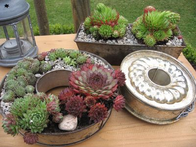 Alte Backformen.....mit Hauswurzen bepflanzt , eine Idee die ich aus der Gartengallerie mitgebracht habe. Nun m?ssen die Formen nur noch etwas rostiger werden :-)))