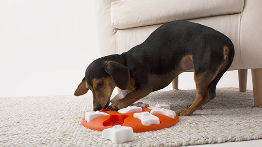 Puzzle Toys Best Dog Toys Dog Puzzles Dogs