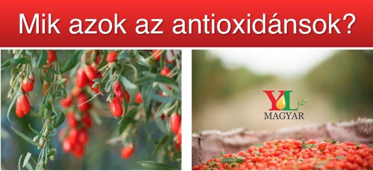 10 érv a fogyasztáshoz  -15,6%-os fehérjetartalommal, a farkasbogyó annyi fehérjét tartalmaz, mint a nyers zab, az egyik leggazdagabb ismert növényi fehérjeforrás. -A farkasbogyó szárazanyagtartalma több arginint tartalmaz, mint bármely más ismert növényi L-Arginin forrás.  -A farkasbogyóban lévő taurin normalizálja a vércukorszintet, kiegészítő terápia diabétesz esetén -A farkasbogyómag olaja zsírsavak különleges egyvelegét tartalmazza, mely a bőr számára ideális nedvesség-visszatartóvá és…