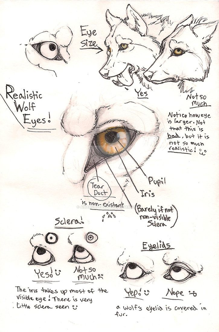 how to draw a easy wolf eye