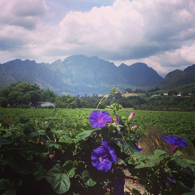 Beautiful Franschhoek valley- home of la Clé des Montagnes- 4 luxurious villas on a working wine farm