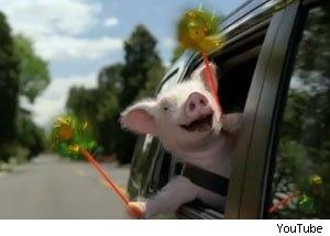 The Geico piggy...weeeeee