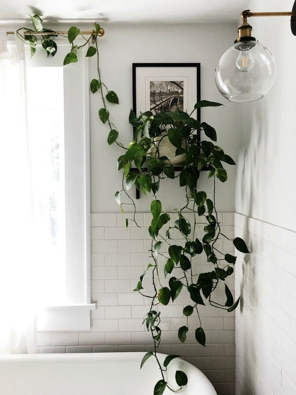 Bathroom plant and light fixture