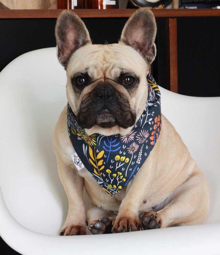 Un #bandana pour chien avec un tissu exclusif #madeinfrance !