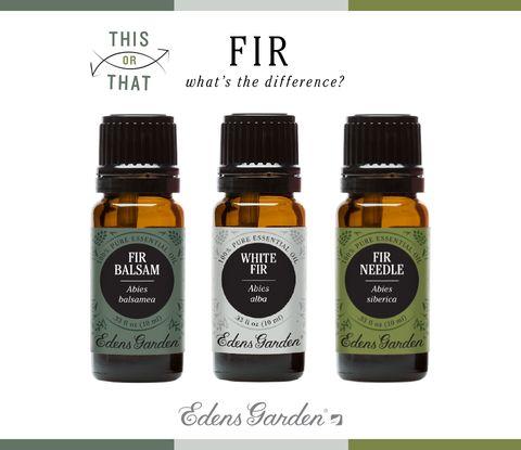 This Or That? White Fir, Fir Needle and Fir Balsam – Edens Garden