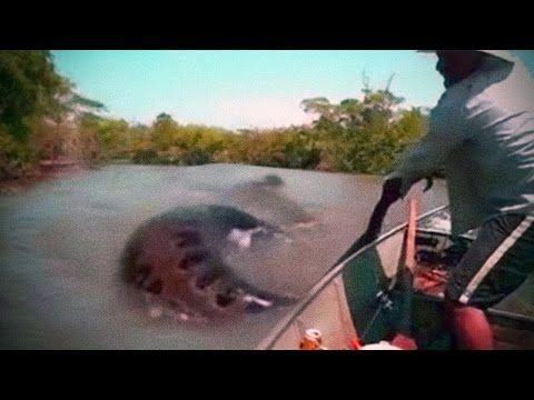 Megalodon Shark Caught on Tape, Real Mermaids, Top 5 Giant ...