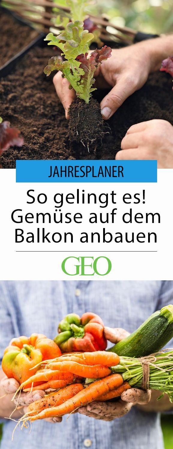 Selbstversorger Balkon: Garten Tipps für's Jahr