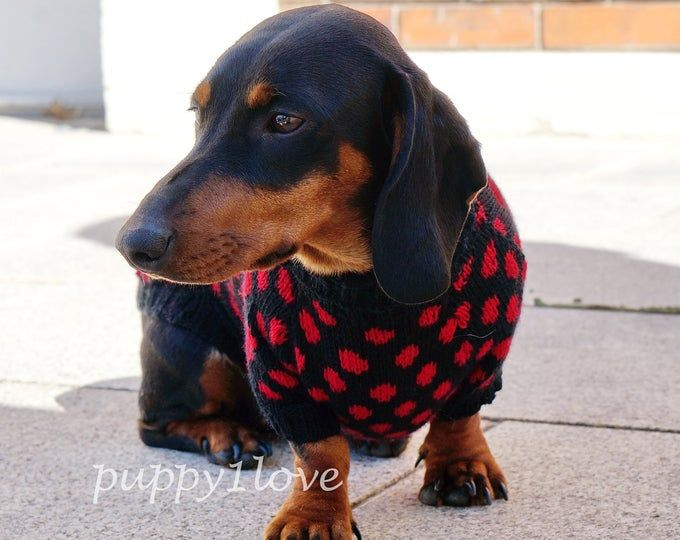 Pdf Download Knit Pattern For Miniature Dachshund Dog Sweater