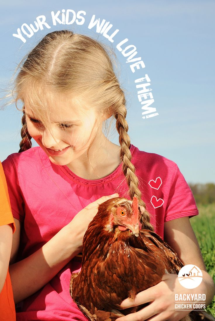 Rhode Island Reds make perfect friends for your kids! These chooks will love receiving all the attention from your little ones. Read more about this brilliant breed here, http://www.backyardchickencoops.com.au/5-reasons-to-love-rhode-island-red-chickens #loveyourchickens #familypet #rhodeislandredchickens