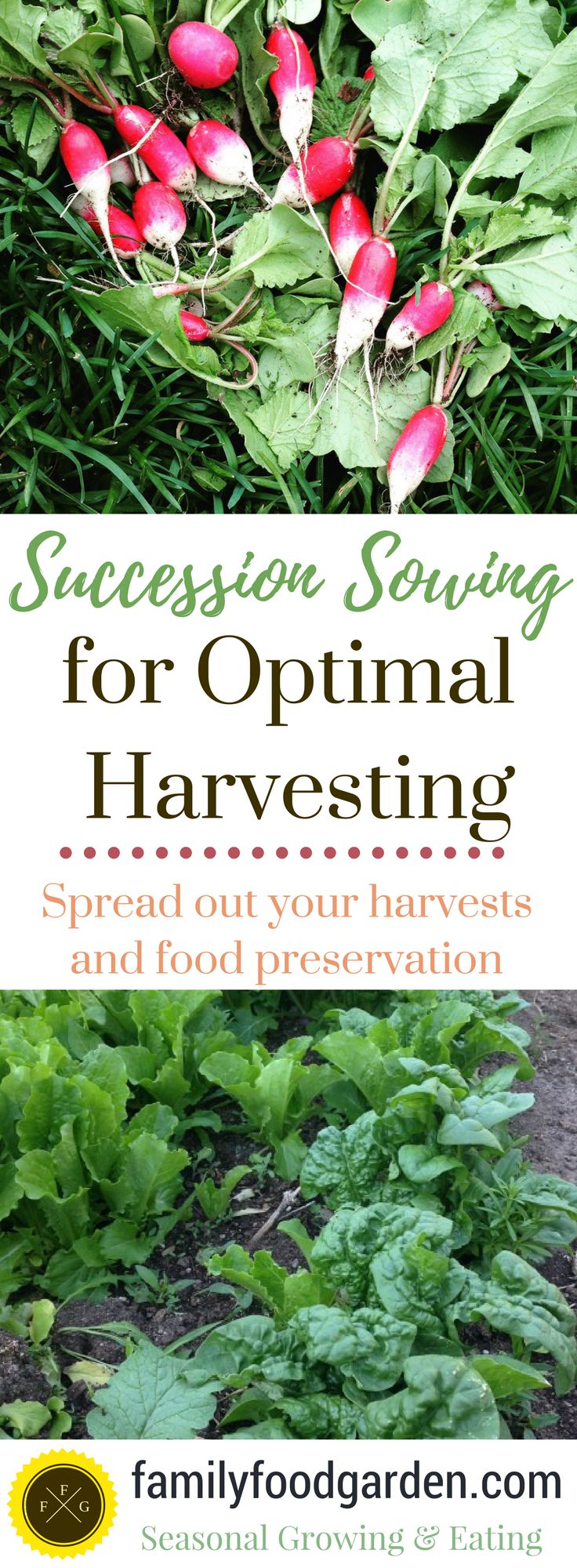Succession Sowing for Optimal Harvests