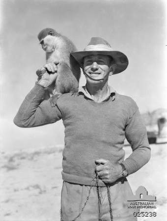 "An unidentified Australian Serviceman with 'Smiler', a pet monkey which is the mascot of 2/23rd Australian Infantry Battalion (known as Albury's own). 'Smiler' has seen quite a lot of active service, and is in fact, a bit ""bomb happy"". He can distinguish between friendly and enemy planes and dives for a slit trench immediately on hearing the latter. North Africa: Western Desert. 11 April 1942."