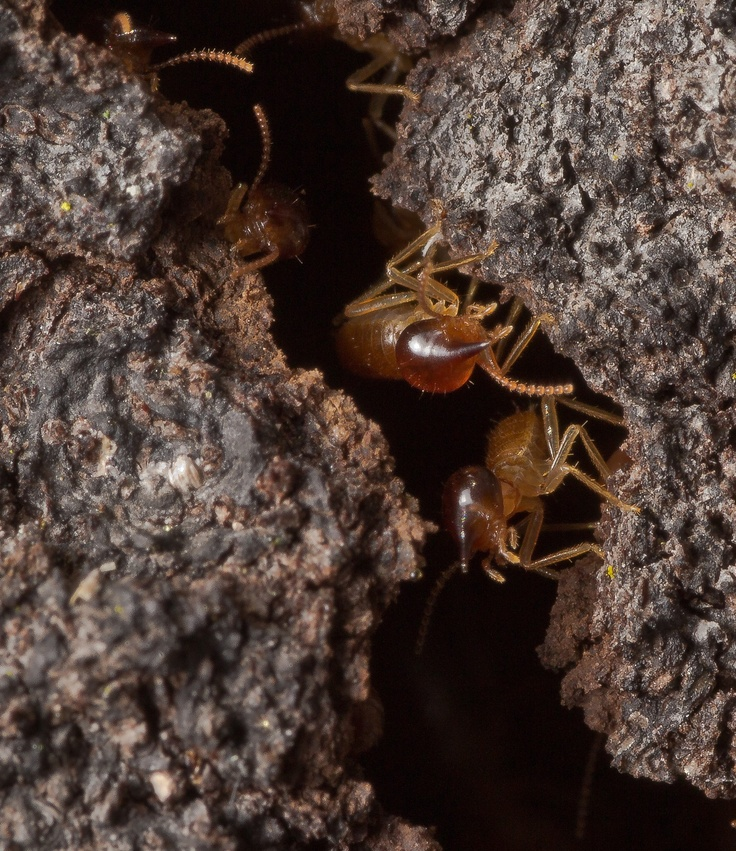 B And B Termites 304 best images about ...