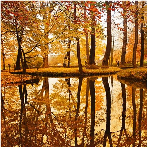 The Golden Pond, The Netherlands.#Repin By:Pinterest++ for iPad#: Autumn Fall, Colors, Golden Ponds, Beautiful Places, The Netherlands, Trees, Parallel Universe, Autumn Photo, Natural