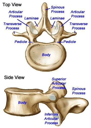 Diagram   coach carlsbad Of Vertebra outlet scotty dog diagram for lumbar spine