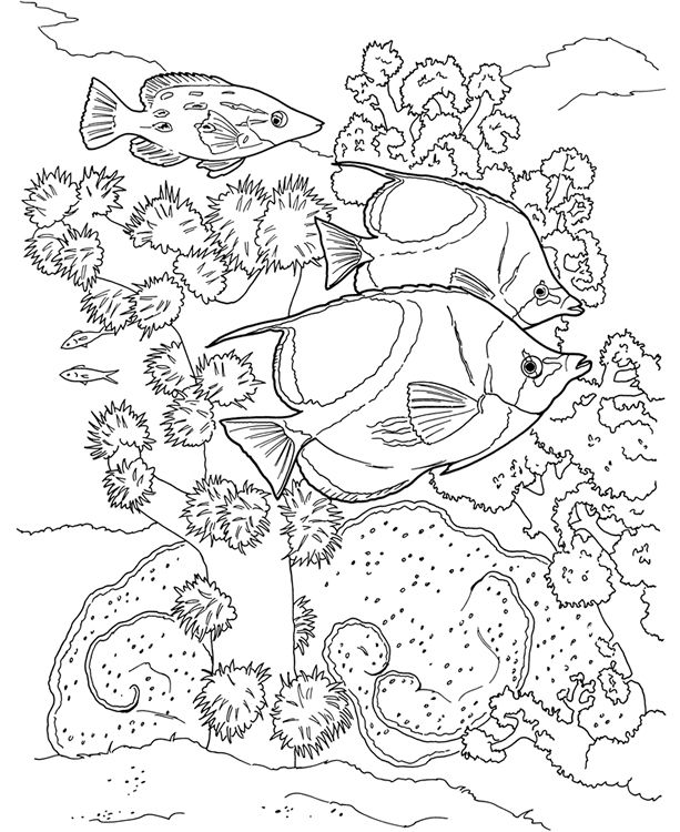 coral reef coloring book sample dover