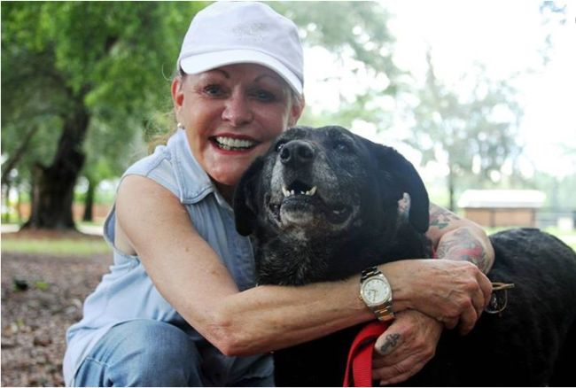 DOLLY HERO Dog who walked 30 miles only to be rejected by her family is adopted by millionaire ❤ Dolly