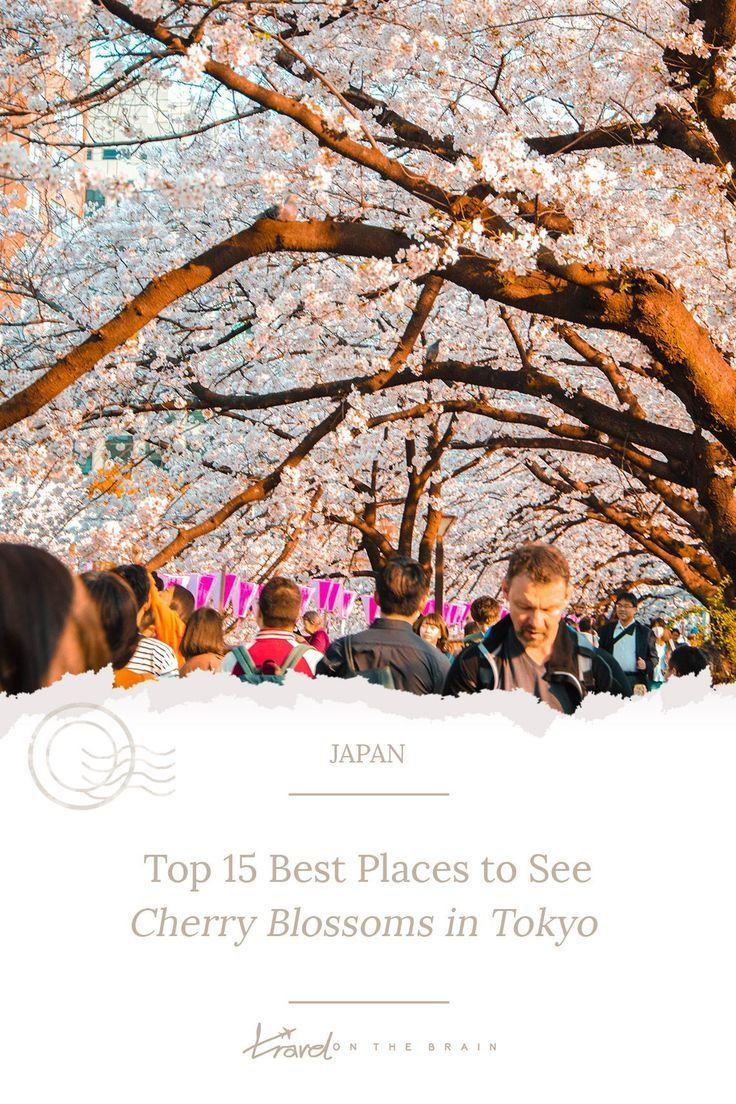 Top 15 Best Places To See Cherry Blossoms In Tokyo Free Guide Asia Destinations Asia Destinations Places To See Beautiful Places In Japan