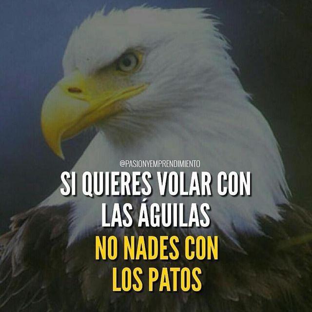 Si quieres volar con las águilas, no nades con patos.
