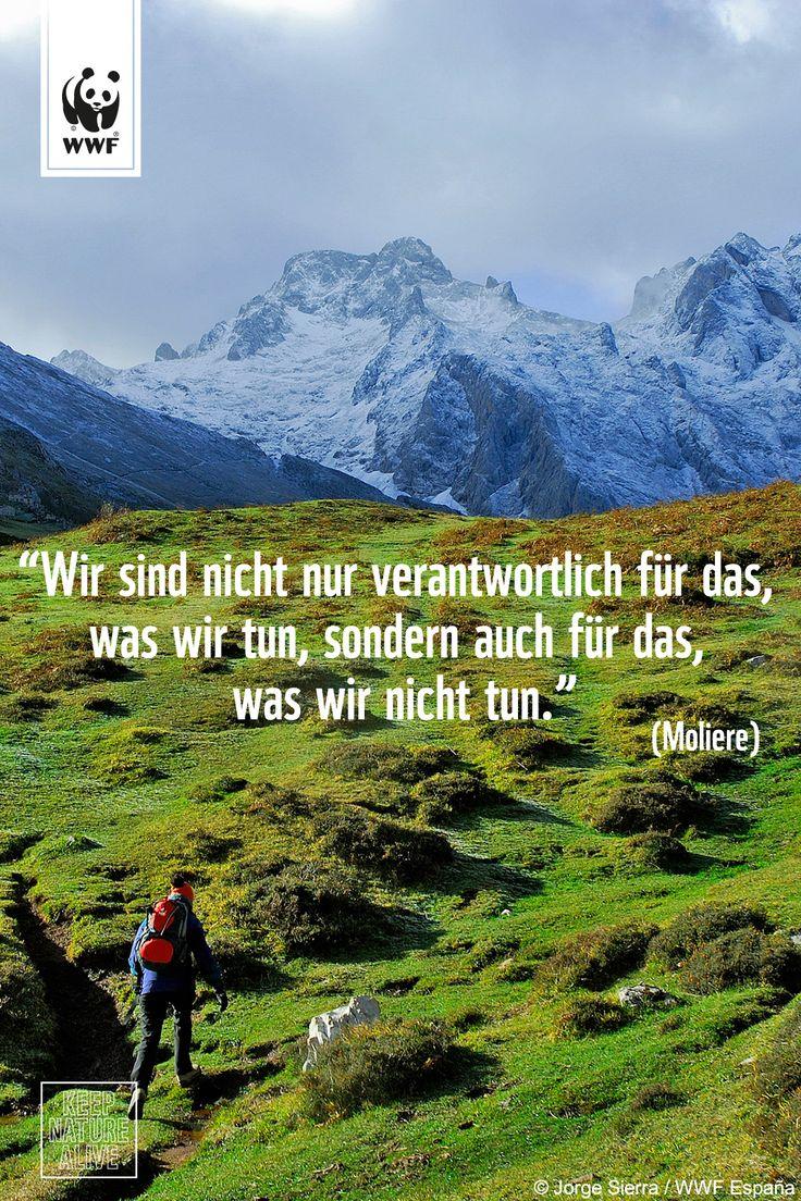Zitat zum Sonntag.  Handelt jetzt - schützt Europas Wildnis: www.wwf.de/keep-nature-alive #NatureAlert