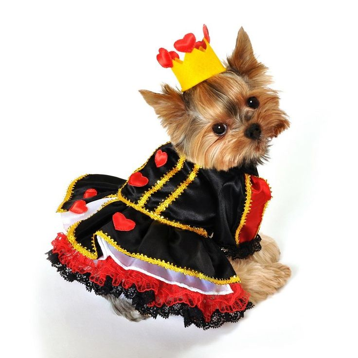 two piece royal queen of hearts dog costume includes tiered lace trim dress with red heart accents attached petticoat and heart crown - Dogs With Halloween Costumes On