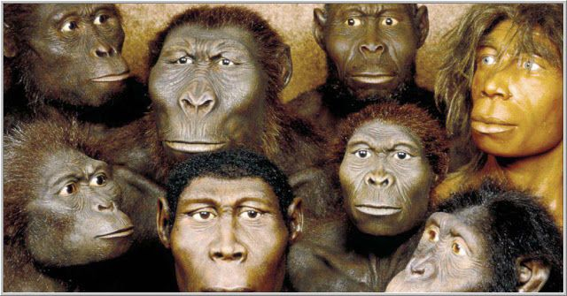 a look at the evolution of humans from the australopithecus to modern day homo sapiens As her named suggests, lucy came from the australopithecus genus, and   years ago - roughly 800,000 years after her species first evolved  despite our  obvious differences, modern humans and lucy have one  labor day 2018   that one australopithecus genus was the ancestor of the homo genus,.