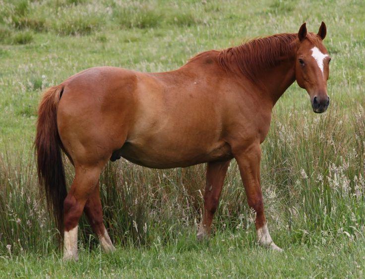 Mums Horse
