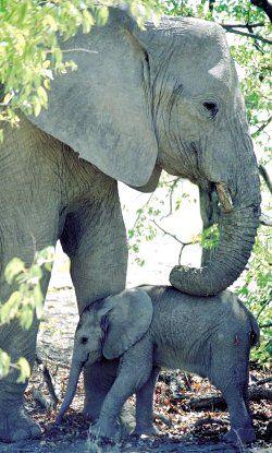 Love is love. And I love elephants!