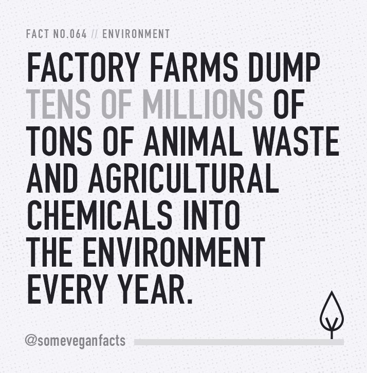 Factory farms dump tens of millions of tons of animal waste and agricultural chemicals into the environment every year. Source // http://www.foodispower.org/pollution-water-air-chemicals/