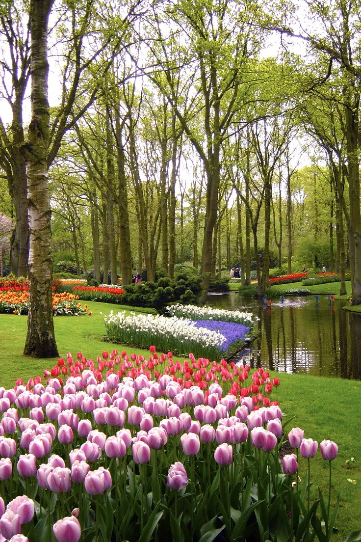 Beautiful natural gardens - Keukenhof Gardens In Lisse Holland Spectacular Just Spectacular Can T Wait To Go Again