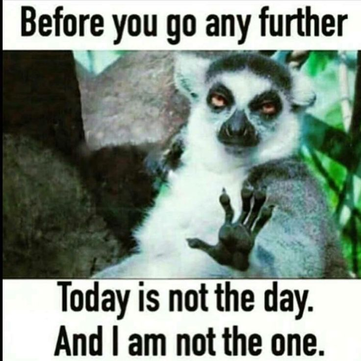 Our science teacher has this taped to the back of her computer so that whenever we are waiting to talk to her we are just awkwardly staring at a lemur