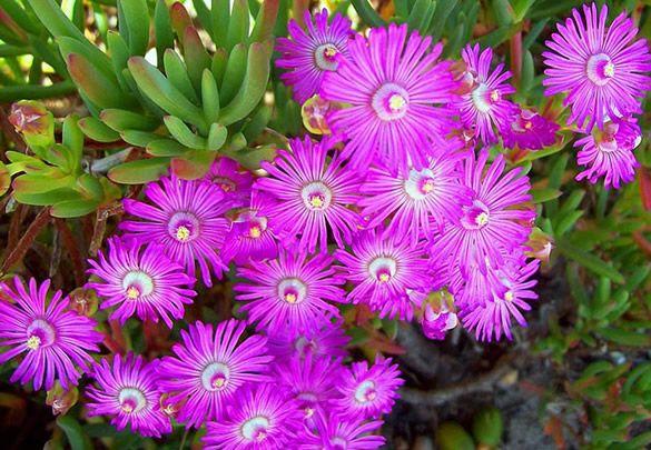 Lindo pé de flores roxas