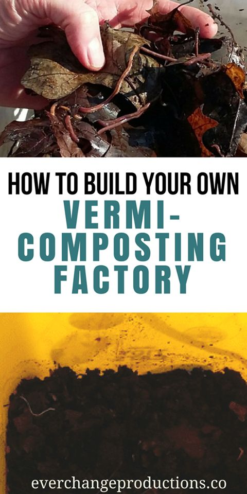There is no end to the numerous benefits that come from having your own vermicompost or fertilizer converted from organic waste by red wiggler worms.