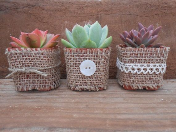 20 Rosette Succulents Wrapped In Burlap Your by SucculentsGalore, $80.00