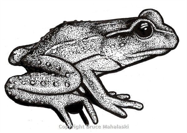 Rare native New Zealand Frog. Used on a wrapping paper by Live Wires 1996.