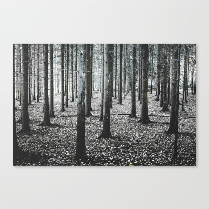 Coma forest Canvas Print