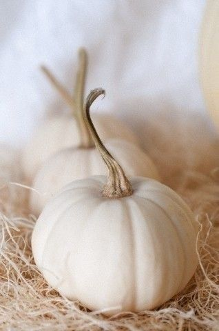 "White ""ghost"" pumpkins. * AUTUM - FALL - LEAVES - THANKSGIVING - PUMPKINS - SWEATER WEATHER - COCOA - HOT CHOCOLATE!"