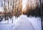 Domaine de la forêt perdue (Notre-Dame-du-Mont-Carmel)