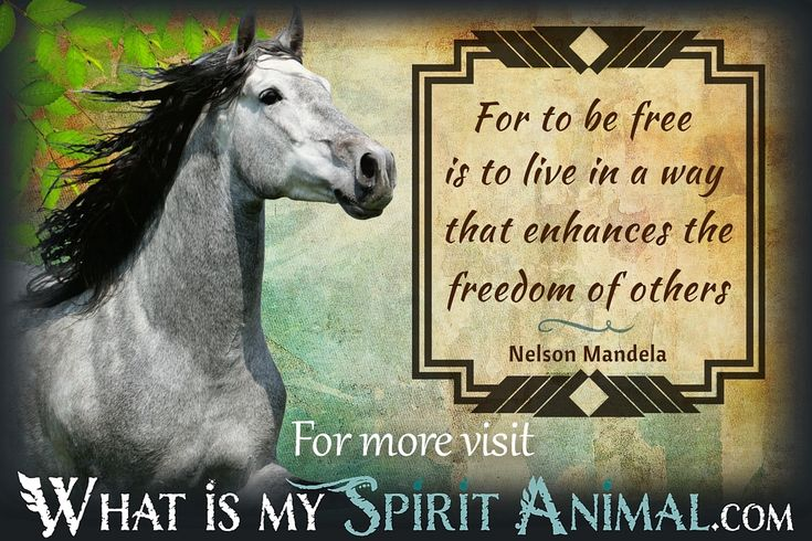 Cute Horse Quotes: Best 25+ Inspirational Animal Quotes Ideas On Pinterest