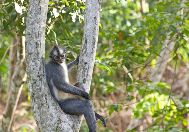 "Gunung Leuser National Parkr"" http://avaxnews.net/educative/gunung_leuser_national_park.html"