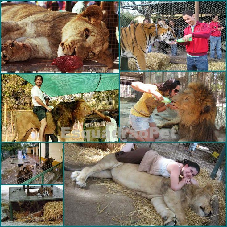 """EsquadrãoPet: Zoológico de Lujan. Animais zumbis e o turismo dos """"sem noção""""."""